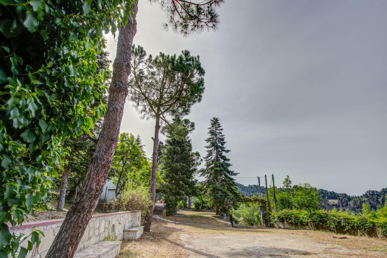 Villa Tulip Garden and View